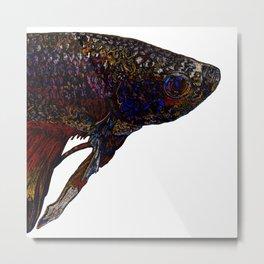 Betta Fighting Fish Head Metal Print