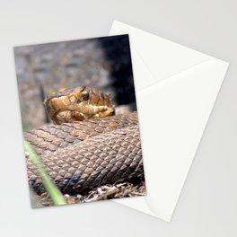 Watercolor Snake, Water Moccasin 18, Merchants Millpond, North Carolina Stationery Cards