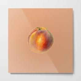 49. Watercolour Braemar Peaches Painting (Prunus Persica) Metal Print