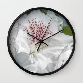 beautiful white flowers in the rhododendron park Wall Clock