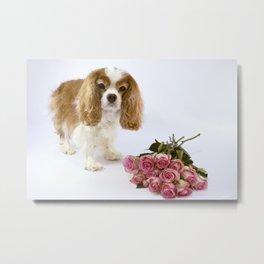 Cavalier King Charles Spaniel With Pink Roses Metal Print