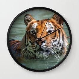 Cincinnati the Tiger in the Pool Wall Clock