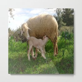 Lamb Suckling From An Ewe Metal Print