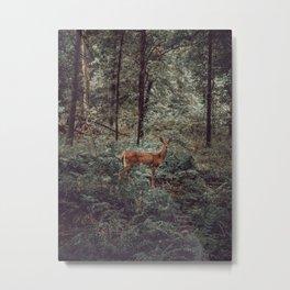 Sweet Intrigue Metal Print