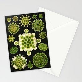 Ernst Haeckel - Melethallia Stationery Cards