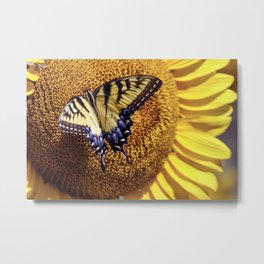 Swallowtail On A Sunflower Metal Print