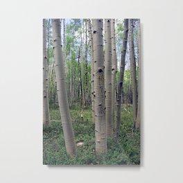 Spring Aspen Forest Metal Print