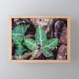 Ivy leaf Framed Mini Art Print