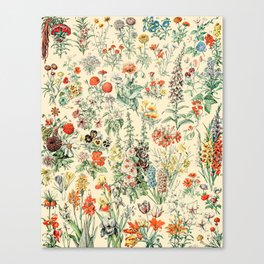 Wildflower Diagram // Fleurs II by Adolphe Millot XL 19th Century Science Textbook Artwork Canvas Print