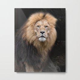 Closeup Portrait of a Male Lion Metal Print
