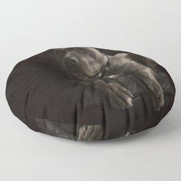 Dog Pit Bull Terrie  Floor Pillow