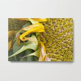 A Flower Of Sunshine Seed Lights Metal Print