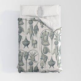 Ernst Haeckel Peridinea Plankton Comforters