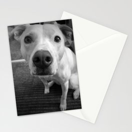 Puppy Nose in Black and White Stationery Cards
