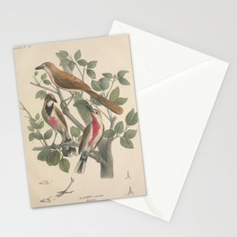Rosy-patched Bushshrike, lanius cruentus3 Stationery Cards
