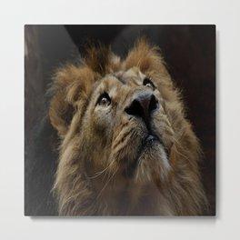 mammal lion animal Metal Print
