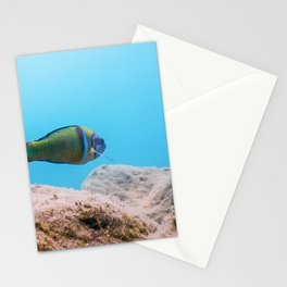 Ornate Wrasse (Thalassoma Pavo) Colorful Fish Underwater Stationery Cards