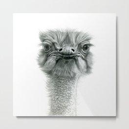 Ostrich G119 Metal Print
