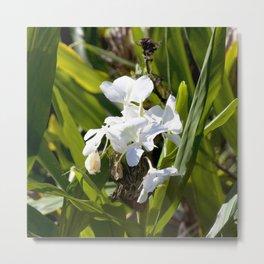 Watercolor Flower, White Ginger Lily 01, Rock Run, Florida Metal Print