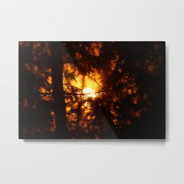 Sunrise Through the Woods Metal Print