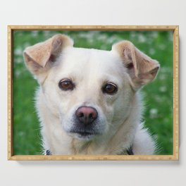 Blond dog portrait Serving Tray