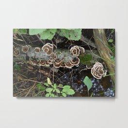 Naturescape Metal Print