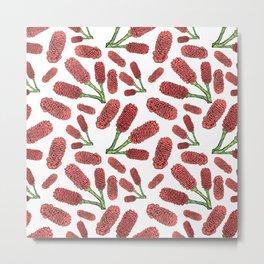 Australian Native Flowers - Decorative Ginger Metal Print