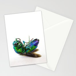 Colorful little fly Stationery Cards