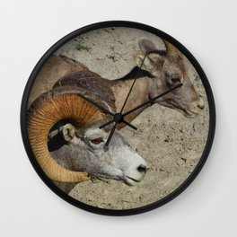 Big horn sheep couple in Jasper National Park Wall Clock