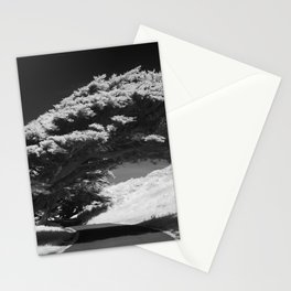 Bending Cypress Black and White Photographic Picture Stationery Cards