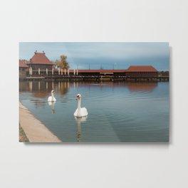 White swans swimming at Lake Palic / Subotica / Serbia Metal Print