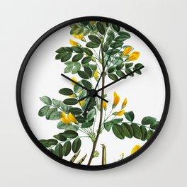 Siberian pea tree (Robinia caragana) from Traite des Arbres et Arbustes que lon cultive en France en Wall Clock