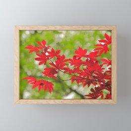 Acer leaves Framed Mini Art Print