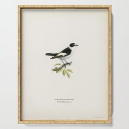 Collared flycatcher (Muscicapa collaris) illustrated by the von Wright brothers Serving Tray