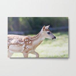 Fallow Deer Fawn 3 Metal Print