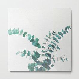 Eucalyptus II Metal Print