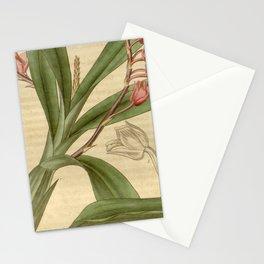 Rodriguezia secunda (= lanceolata) Curtis v. 63 NS 10 (1836) pl 3524 Stationery Cards