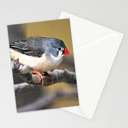 Grey Waxbill Tropical Exotic Little Bird Perching Stationery Cards
