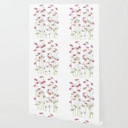 Pink Cosmos Flowers Wallpaper