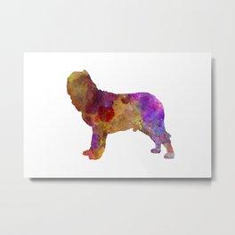 Napolitan Mastiff in watercolor Metal Print