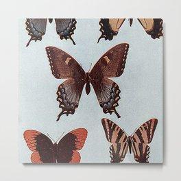 Butterfly Fauna  Metal Print