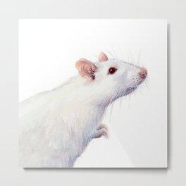 White Rat Watercolor Albino Rat Animal Metal Print
