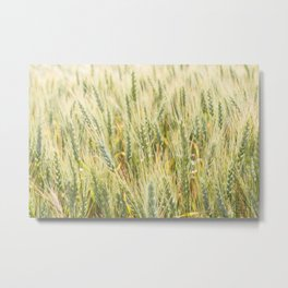 Summer Wheat 3 Metal Print