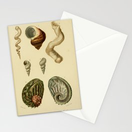 Vintage Print - Universal Dictionary of Natural History (1849) - Molluscs 1 Stationery Cards