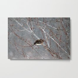 Mourning Dove Asleep in Snowfall Metal Print