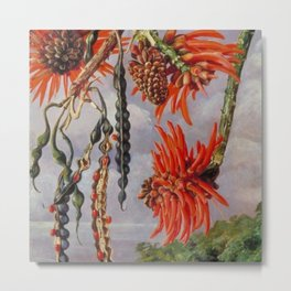 Flowering Red Coral Tree Tropical Flowers still life painting Metal Print