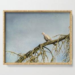 Eurasian Collared Dove Serving Tray