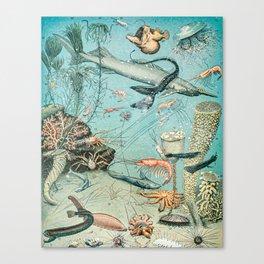 Underwater Creature Diagram // Ocean II by Adolphe Millot XL 19th Century Science Artwork Canvas Print