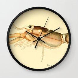Vintage Baby Lobster Illustration (1895) Wall Clock