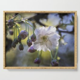 Blossom of Hope in a Cruel Spring Serving Tray